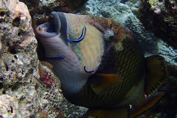 balliste à une station de nettoyage sous-marine