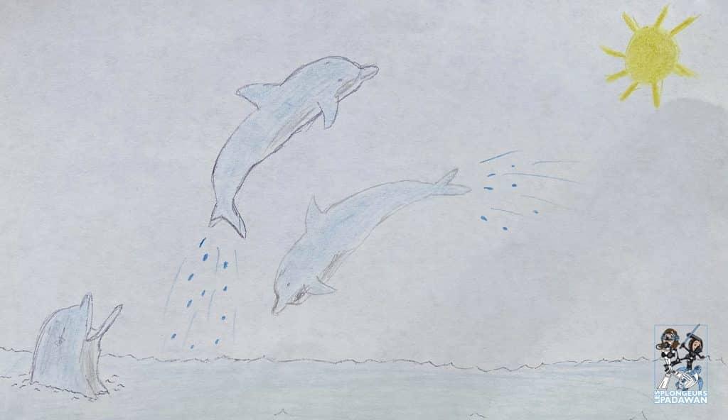 Combien de temps vivent les dauphins et les baleines ?